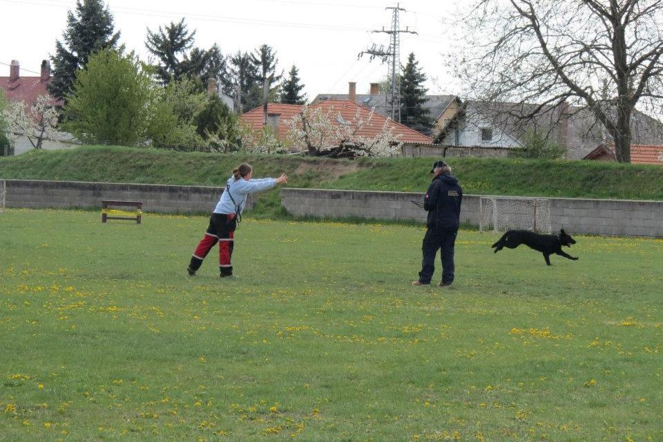 2015_04_18-19_II_JuliusK9_Mentokutyas_Kupa_palya_10
