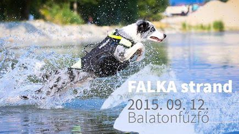 2015_08_28_K9_Zombi_falkastrand_reklamarc_02